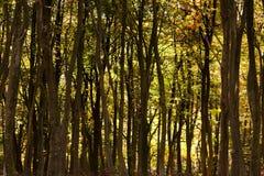 Waldszene mit gelbem und braunem Herbstlaub stockfotos