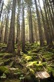 Waldszene mit Moos stockfoto