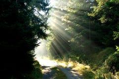 Waldtageslicht Stockfotografie