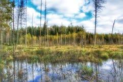 Waldträumen stockfotos