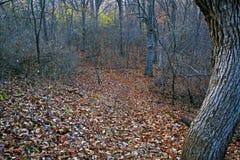 Waldturbulenz Lizenzfreie Stockfotos