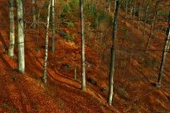Waldumgebung Stockfotografie