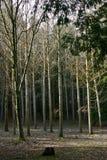 Waldung der Bäume Stockfotos