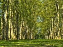 Waldung der Bäume in Frankreich Lizenzfreie Stockbilder