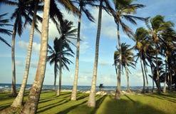 Waldung der Kokosnussbäume durch Strandmaisinsel Lizenzfreie Stockbilder