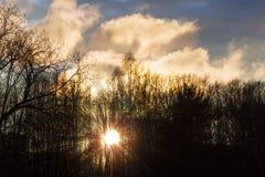 Waldung des Sonnenuntergangs im Frühjahr Stockbild
