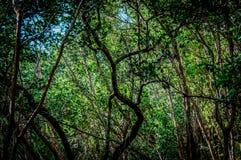 Waldungstreffen-Wasserweise Lizenzfreies Stockbild