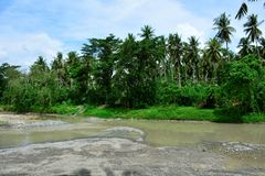 Waldvegetation im Riverbank Lizenzfreie Stockbilder