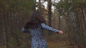 Waldverfolgung Langsame Bewegung stock footage
