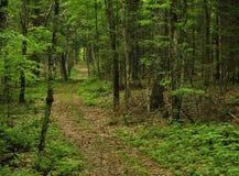 Waldwanderweg im leichten Regen lizenzfreies stockfoto