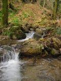 Waldwasser Lizenzfreies Stockbild