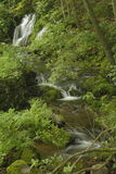 Waldwasserfall, Shenandoah Lizenzfreie Stockfotos