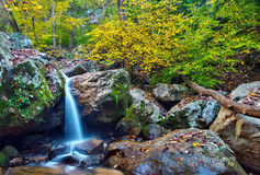 Waldwasserfall und -Herbstlaub Lizenzfreie Stockbilder