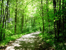 Waldweg Stockbild