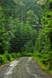 Waldweg Stockfotografie
