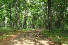 Waldweg. Stockfoto