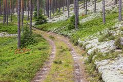 Waldweg lizenzfreie stockbilder