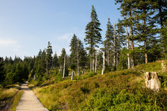 Waldweg Stockfoto