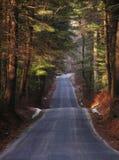 Waldweg Lizenzfreie Stockfotografie
