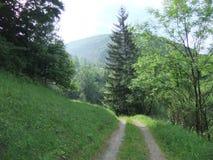 Waldweg Lizenzfreie Stockfotos