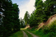 Waldweg bei Pertouli, Trikala, Thessalien, Griechenland stockfoto