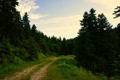 Waldweg bei Pertouli, Trikala, Thessalien, Griechenland lizenzfreies stockfoto