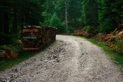 Waldweg bei Pertouli, Trikala, Thessalien, Griechenland lizenzfreies stockbild