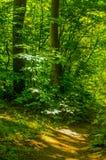 Waldweg belichtet durch die Sonne Stockbilder