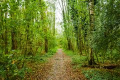 Waldweg in den beusebos die Niederlande Lizenzfreies Stockbild