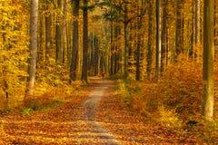 Waldweg in den Herbstfarben im Tricity-Landschaftspark, Gdan stockbild