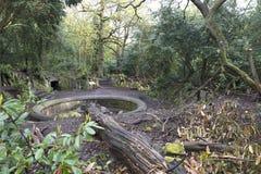 Waldweg - der alte Brunnen Stockfotos