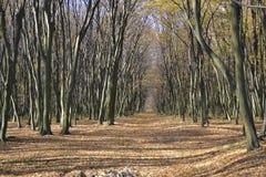 Waldweg in der schönen Perspektive des Herbstes Lizenzfreie Stockfotografie