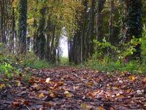 Waldweg an einem Herbsttag in England Stockbild