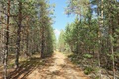 Waldweg an einem sonnigen Herbsttag Lizenzfreies Stockbild