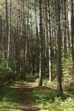 Waldweg an einem sonnigen Sommernachmittag lizenzfreie stockfotos