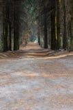 Waldweg an einem Suny-Tag ukraine Stockfotos