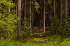 Waldweg Hradkov Stockbilder