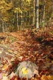 Waldweg im automn Stockbild