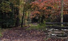Waldweg im frühen Fall stockfoto