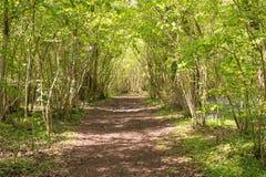 Waldweg im Frühjahr unteres Holz, Ingleston-Common in Gloucestershire lizenzfreies stockbild