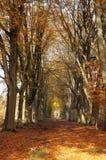Waldweg im Herbst lizenzfreie stockfotografie
