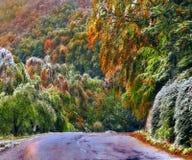 Waldweg im Herbst stockbild