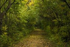 Waldweg im Herbst Stockfotografie