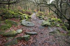 Waldweg im Herbst Lizenzfreie Stockbilder
