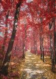 Waldweg im Herbst Stockfotos