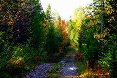 Waldweg im Herbst nach Regen stockbild