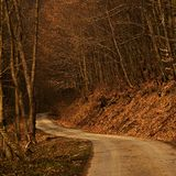 Waldweg an KOHMak Lizenzfreies Stockfoto