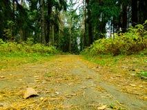 Waldweg an KOHMak Lizenzfreies Stockbild