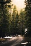Waldweg an KOHMak Lizenzfreie Stockbilder