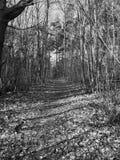 Waldweg an KOHMak Stockbild